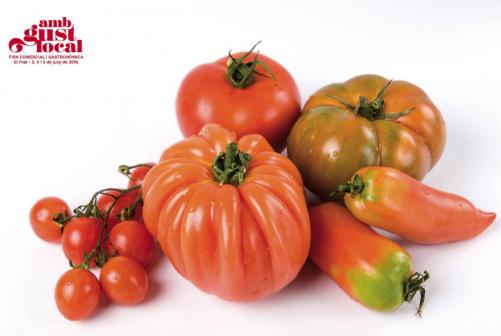 Los tomates del Parque Agreario de Baix Llobregat
